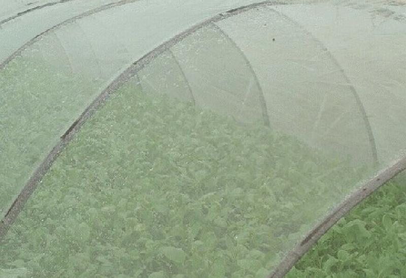 蔬菜大pengfang虫网